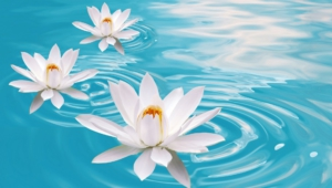 Water Lily High Definition