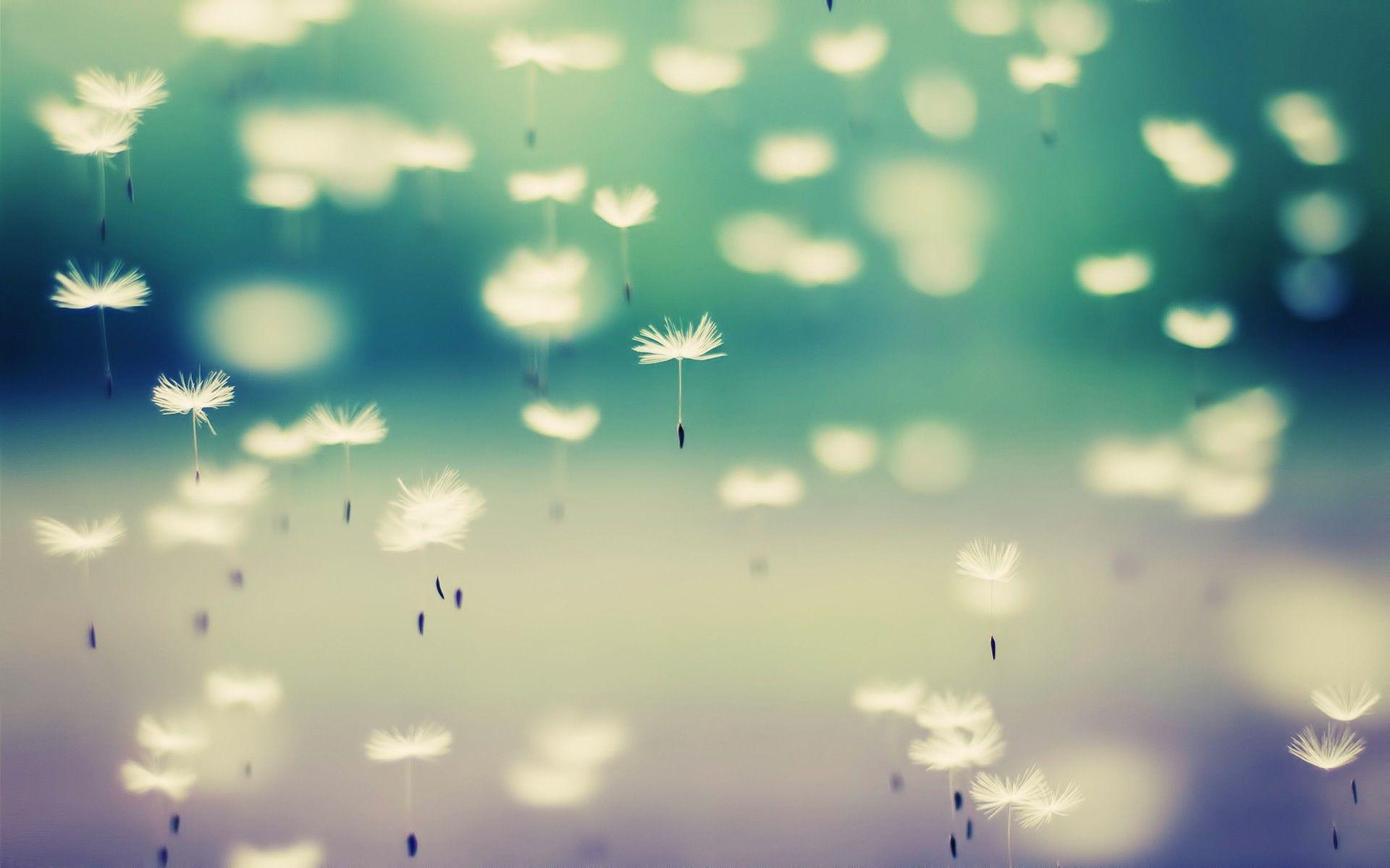 White Dandelion Download