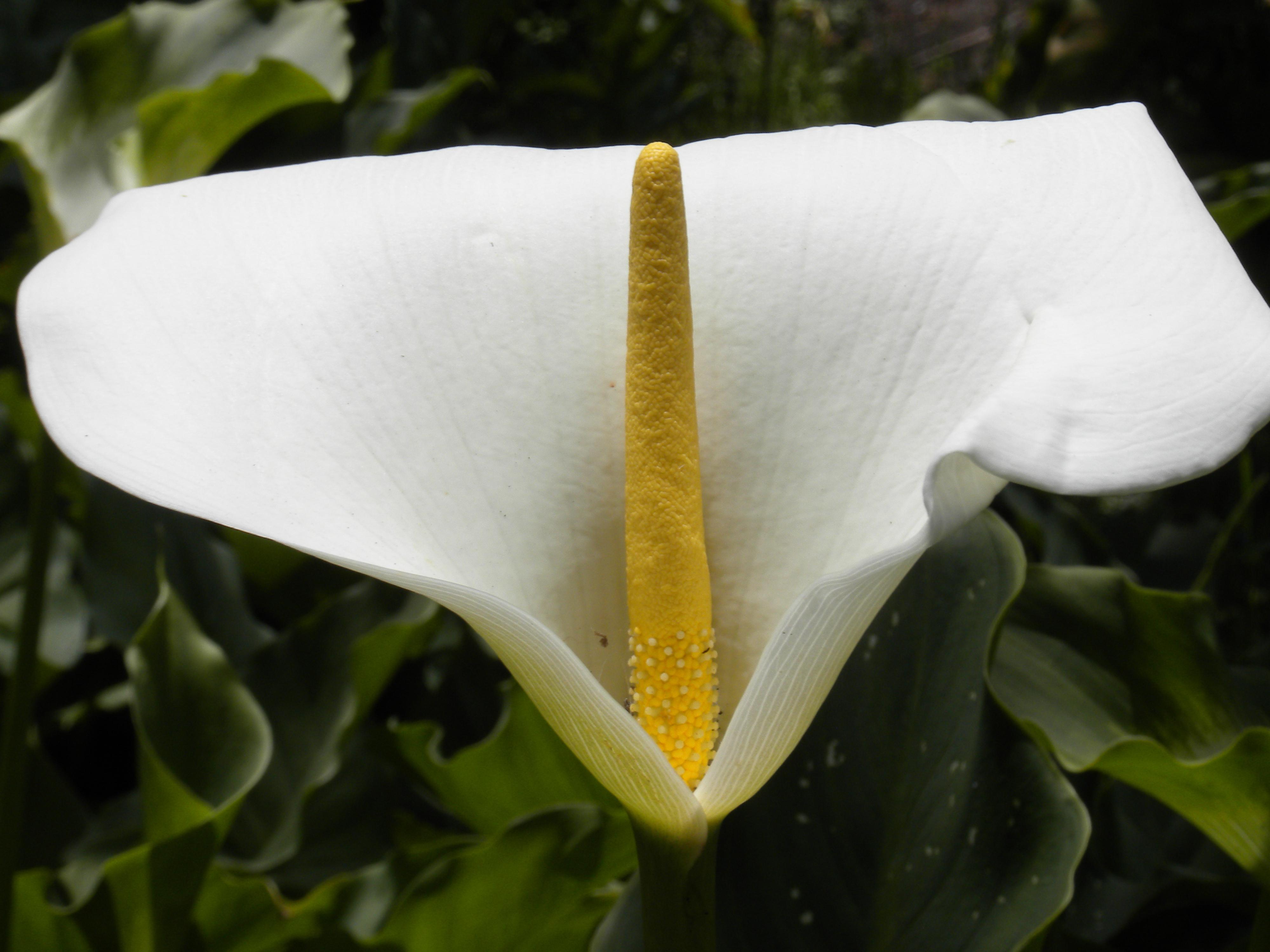White Flowers Desktop Images