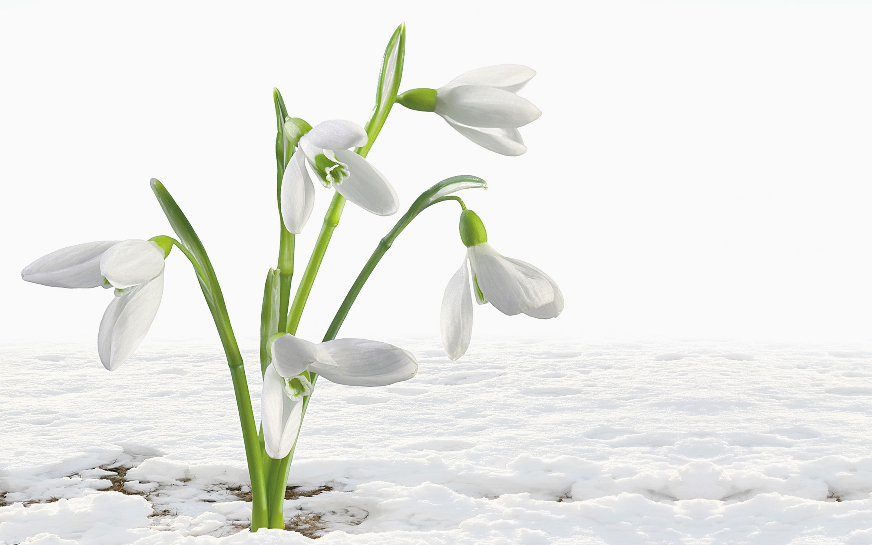 White Flowers Pictures