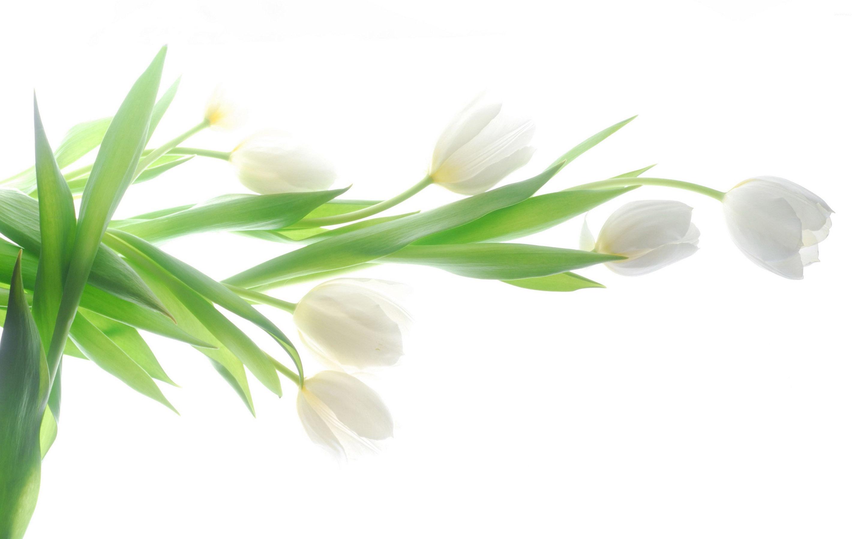 White Flowers Wallpaper For Computer