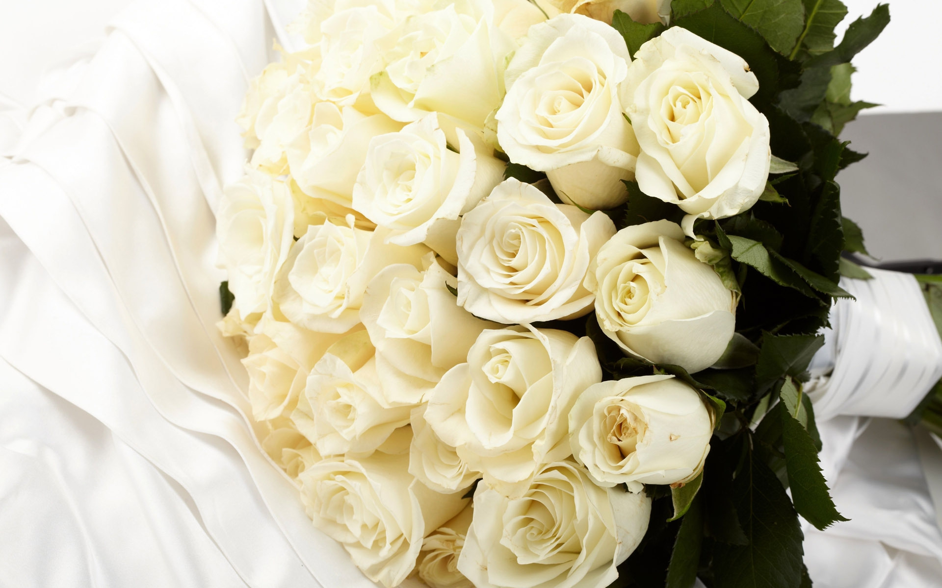 White Rose Desktop Images