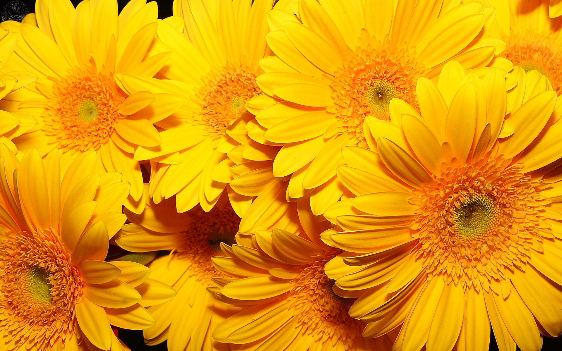 Yellow Flowers 4k