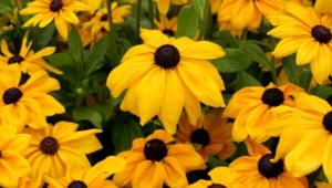 Yellow Flowers Desktop Images