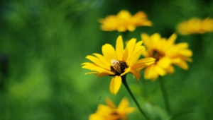 Yellow Flowers Download Free Backgrounds Hd