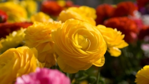 Yellow Flowers Hd Wallpaper