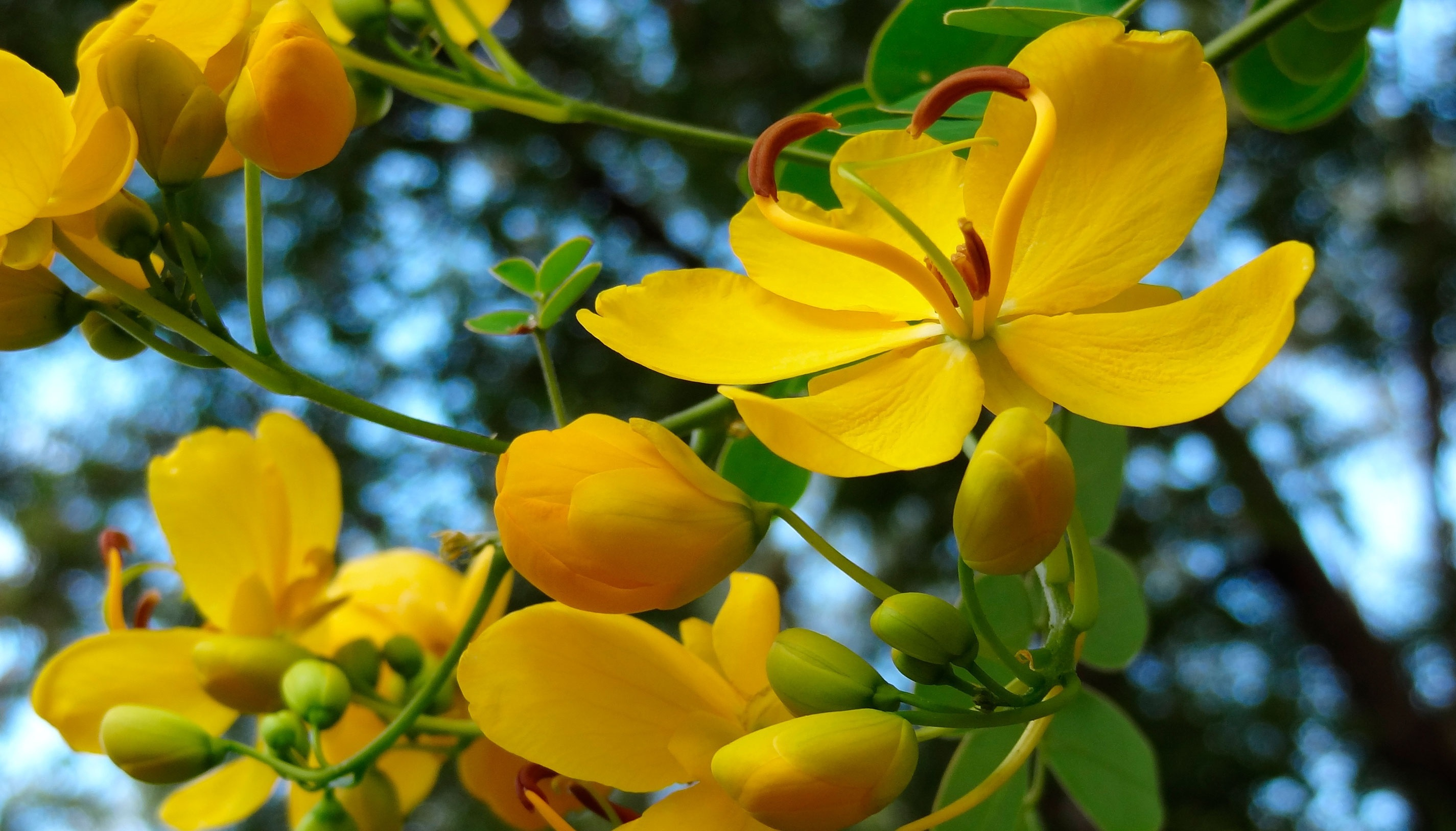 Yellow Flowers High Definition Wallpapers