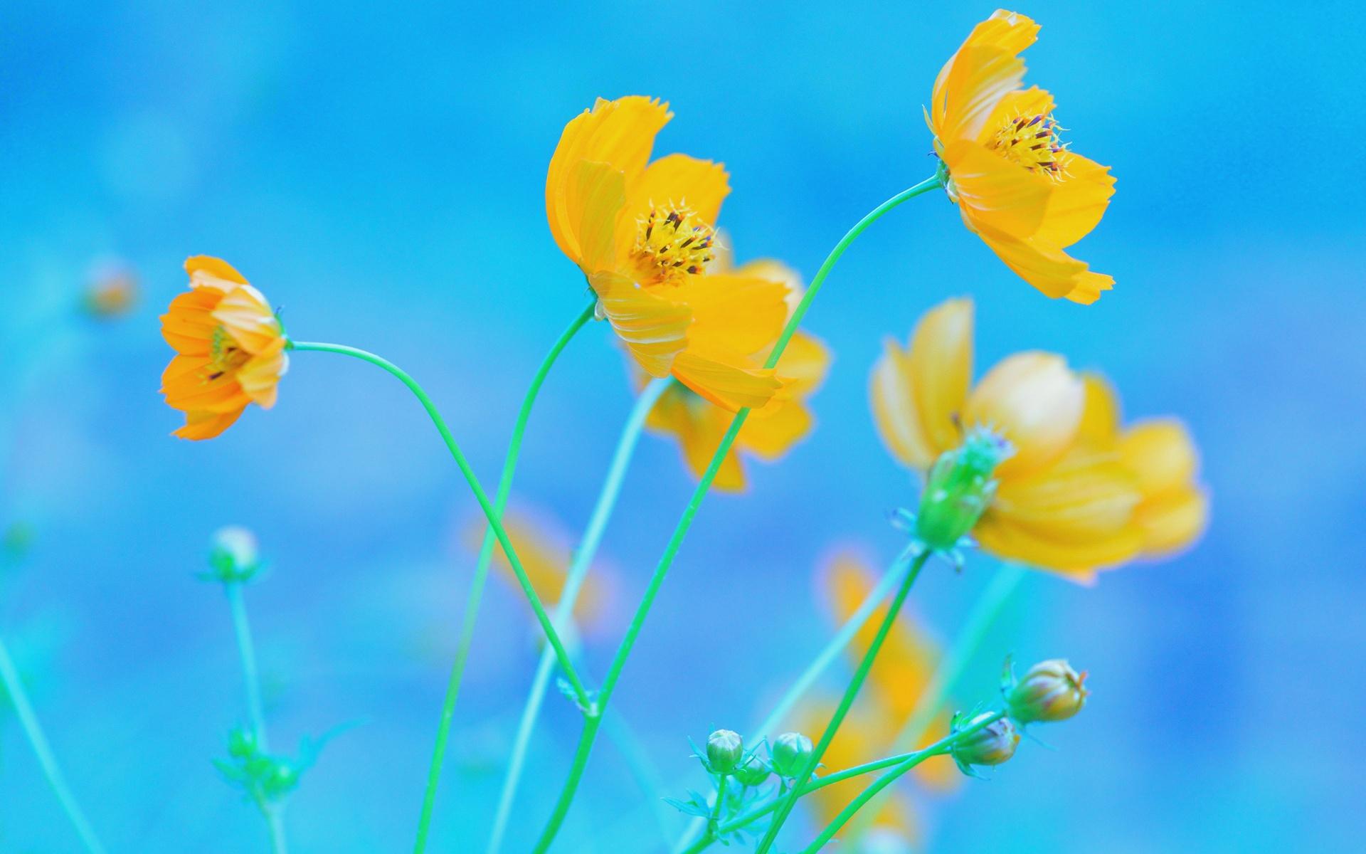 Yellow Flowers Photos