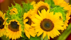 Yellow Flowers Wallpaper For Computer