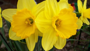 Yellow Flowers Wallpapers Hd