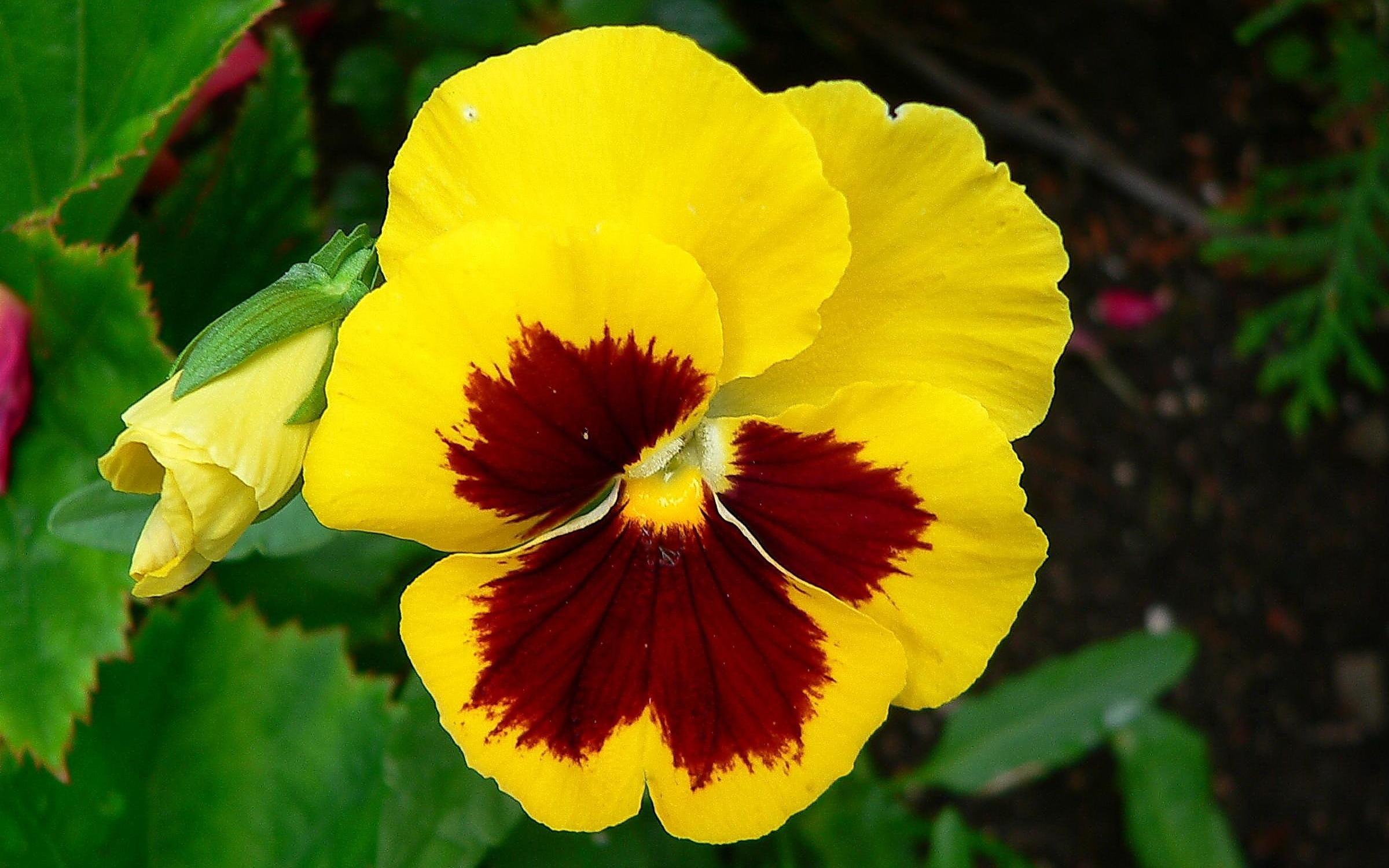 Yellow Flowers For Desktop