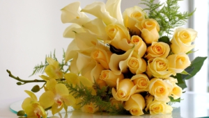 Yellow Rose For Desktop