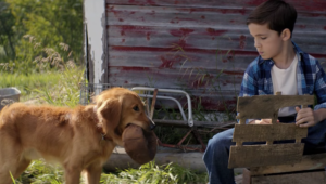 A Dog's Purpose HD Wallpaper