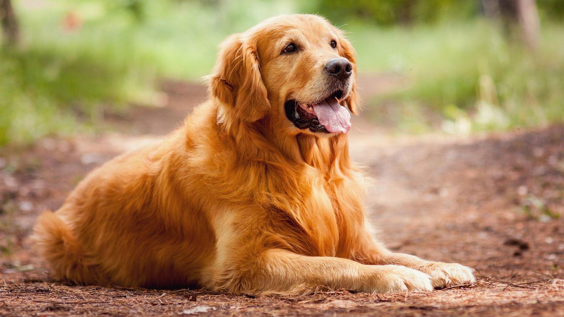 A Dog's Purpose Photos