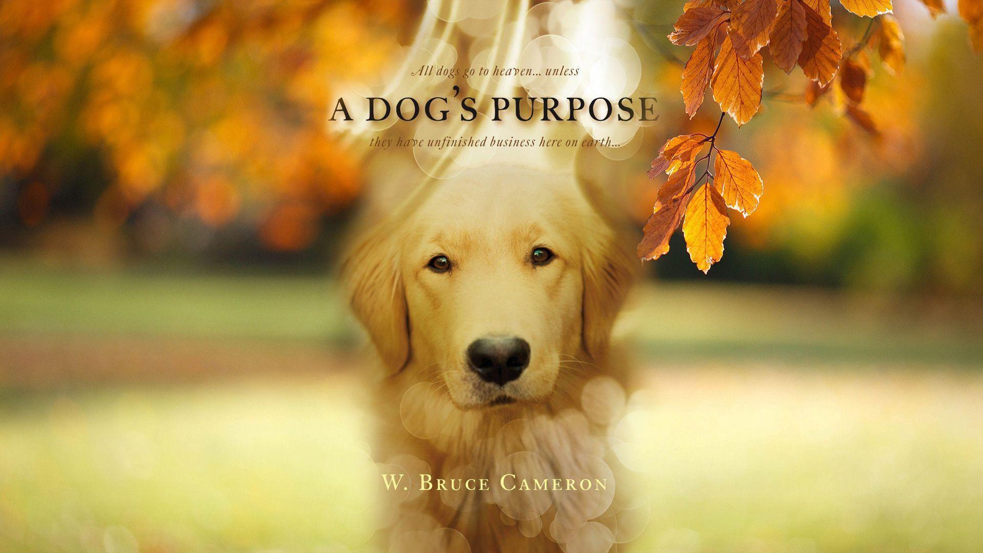 A Dog's Purpose Widescreen