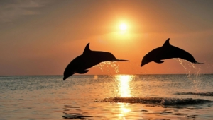 Bottlenose Dolphins Wallpapers HD