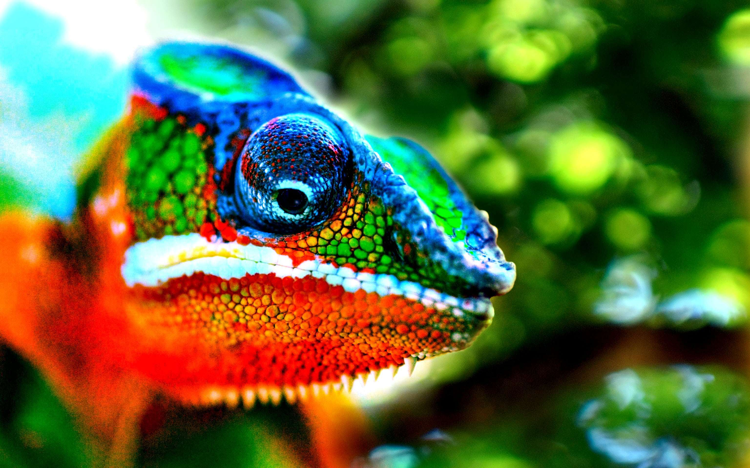 Chameleon High Definition Wallpapers