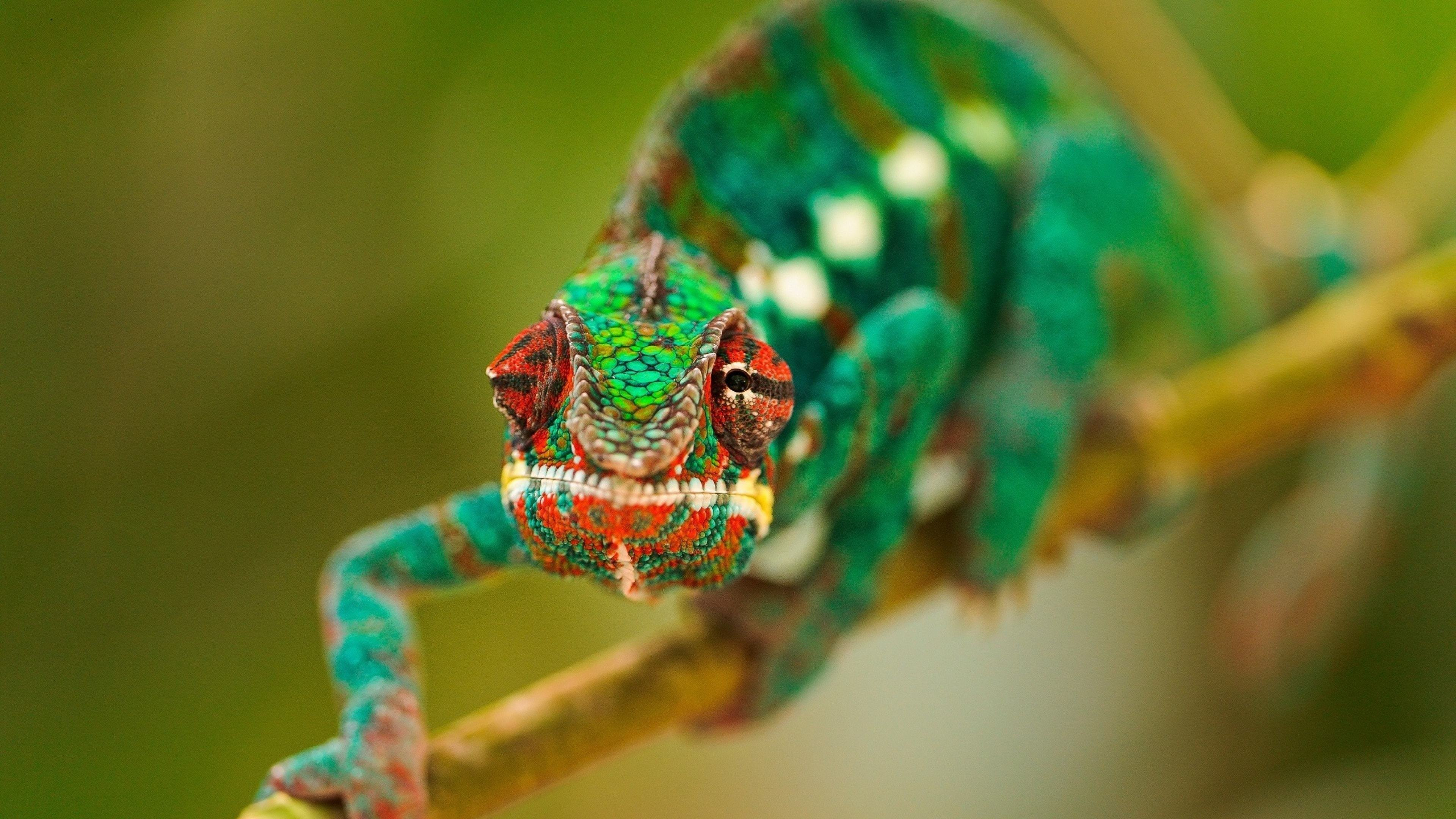 Chameleon Widescreen