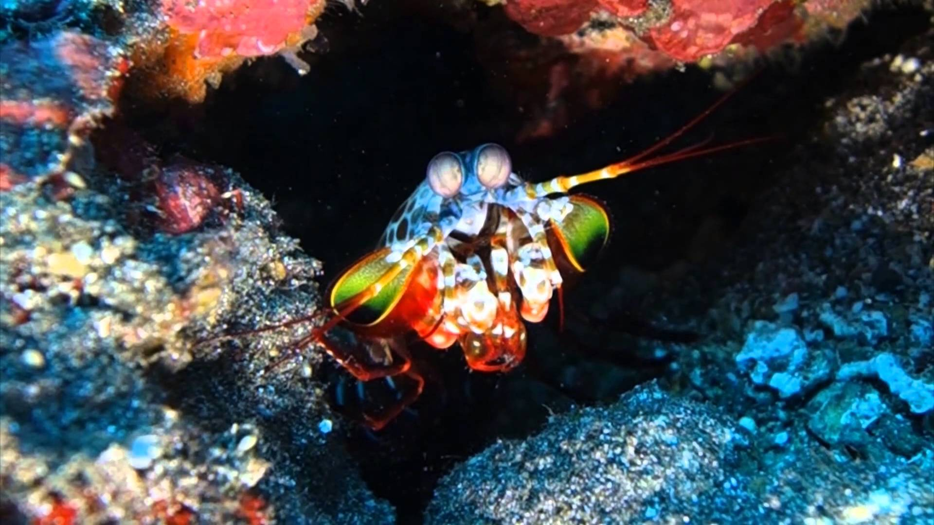 Mantis Shrimp Desktop