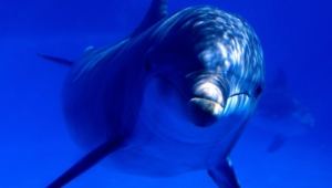 Pictures Of Bottlenose Dolphins