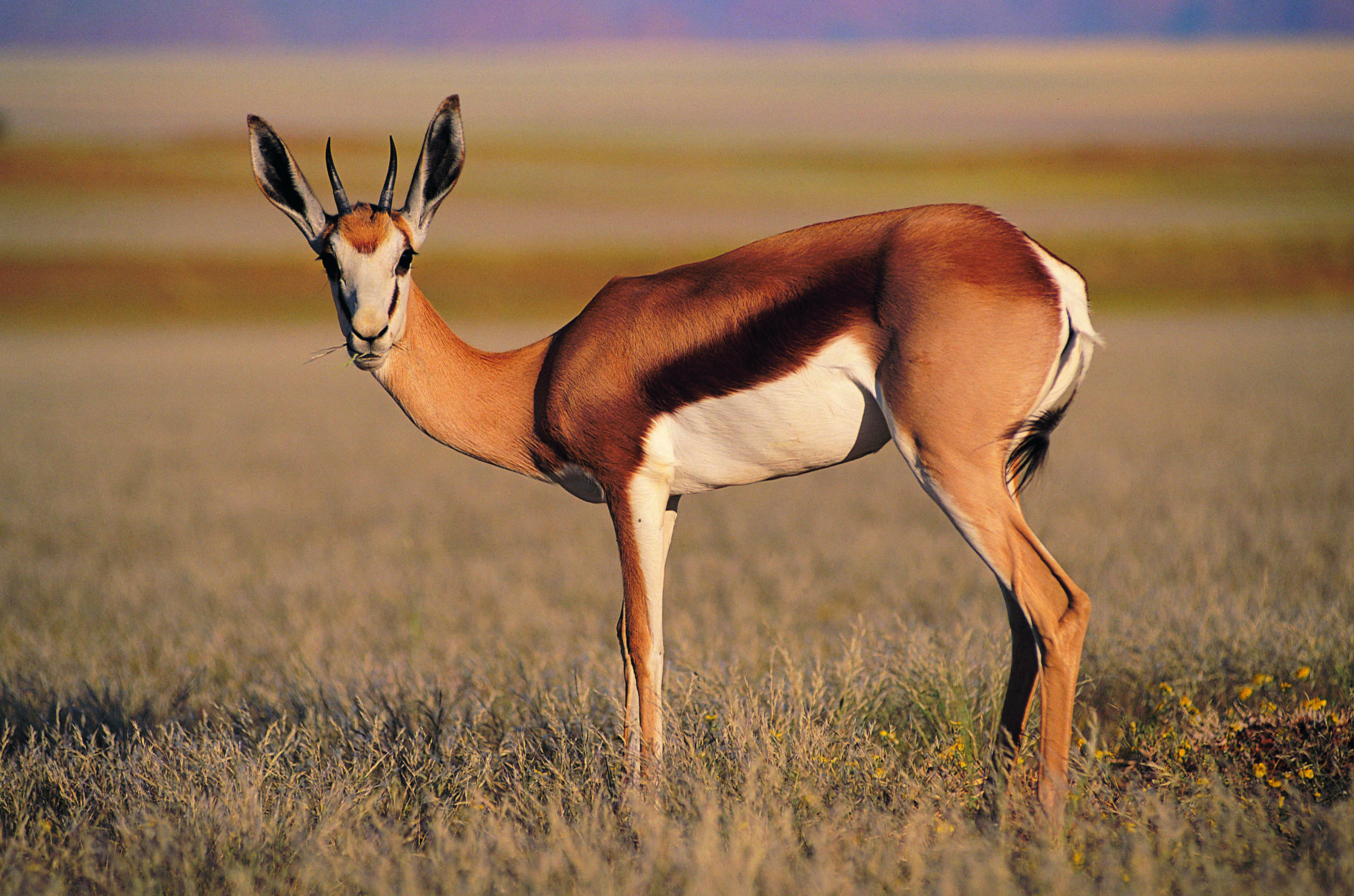 Antelope Photos