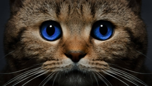 Cat High Definition Wallpapers