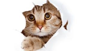 Cat Widescreen