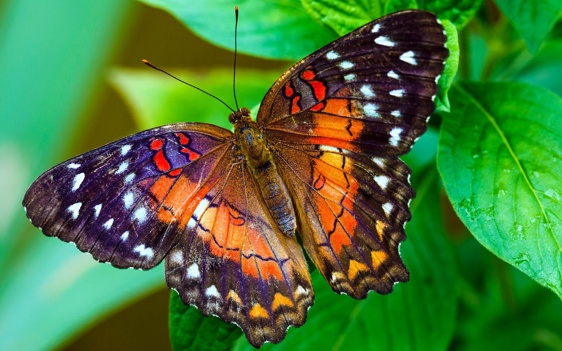 Pictures Of Butterfly