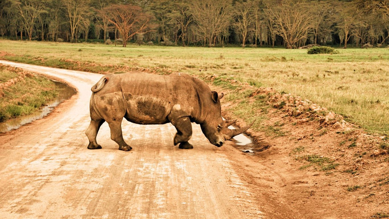 Rhinoceros HD Iphone