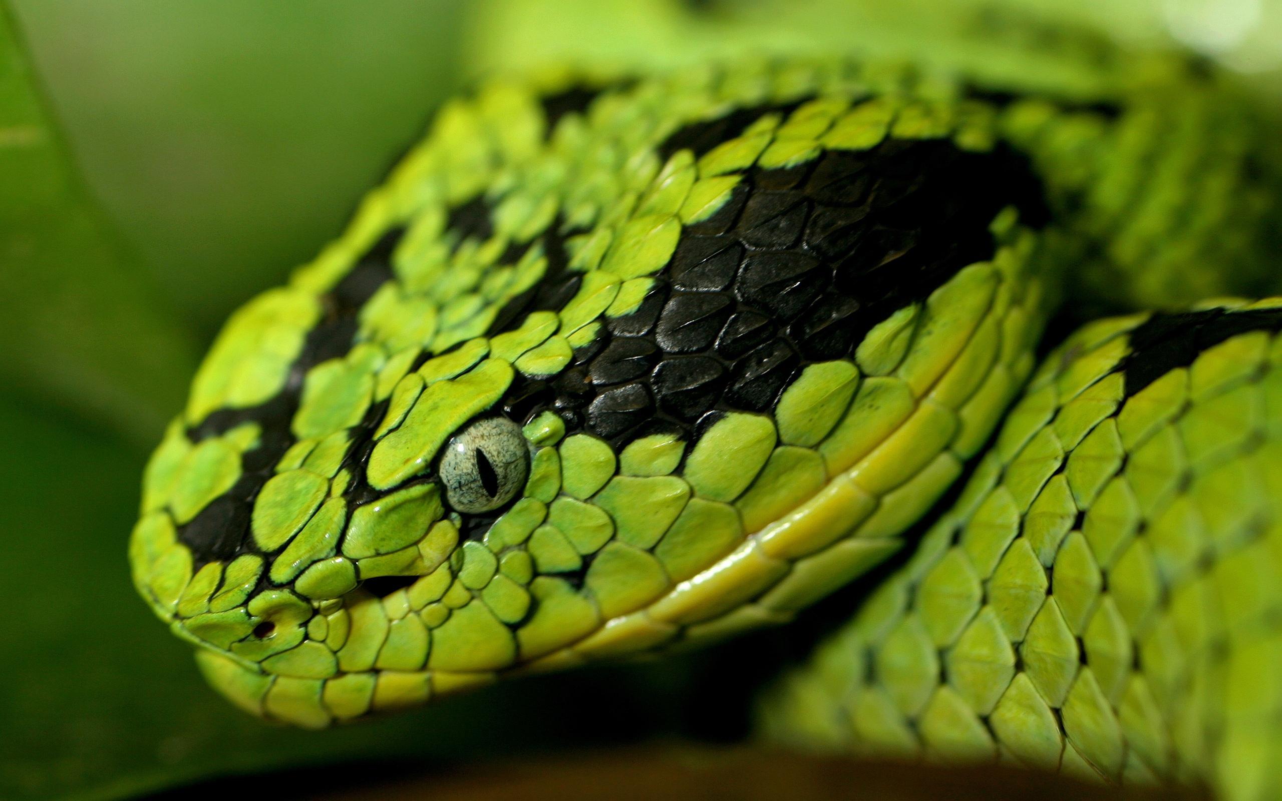 Snake For Smartphone
