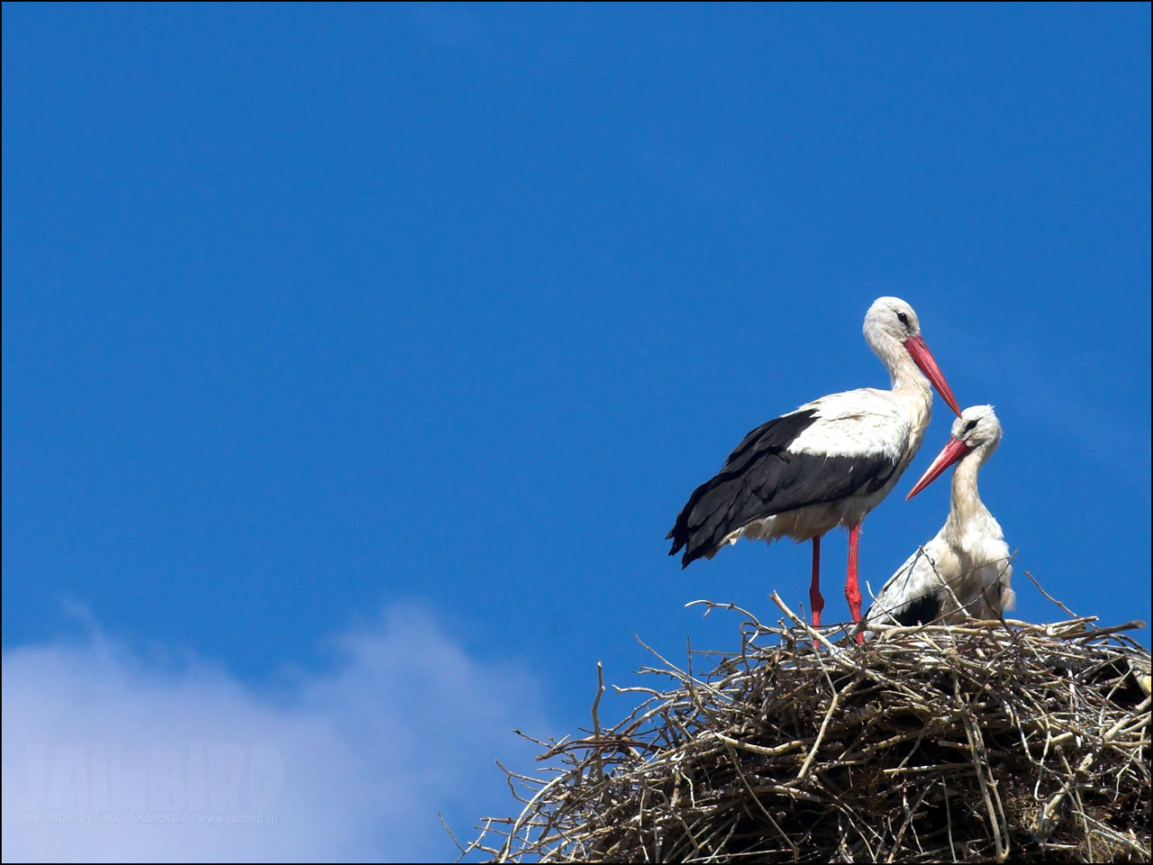 Stork For Desktop
