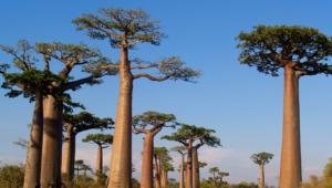 Baobab Desktop Images