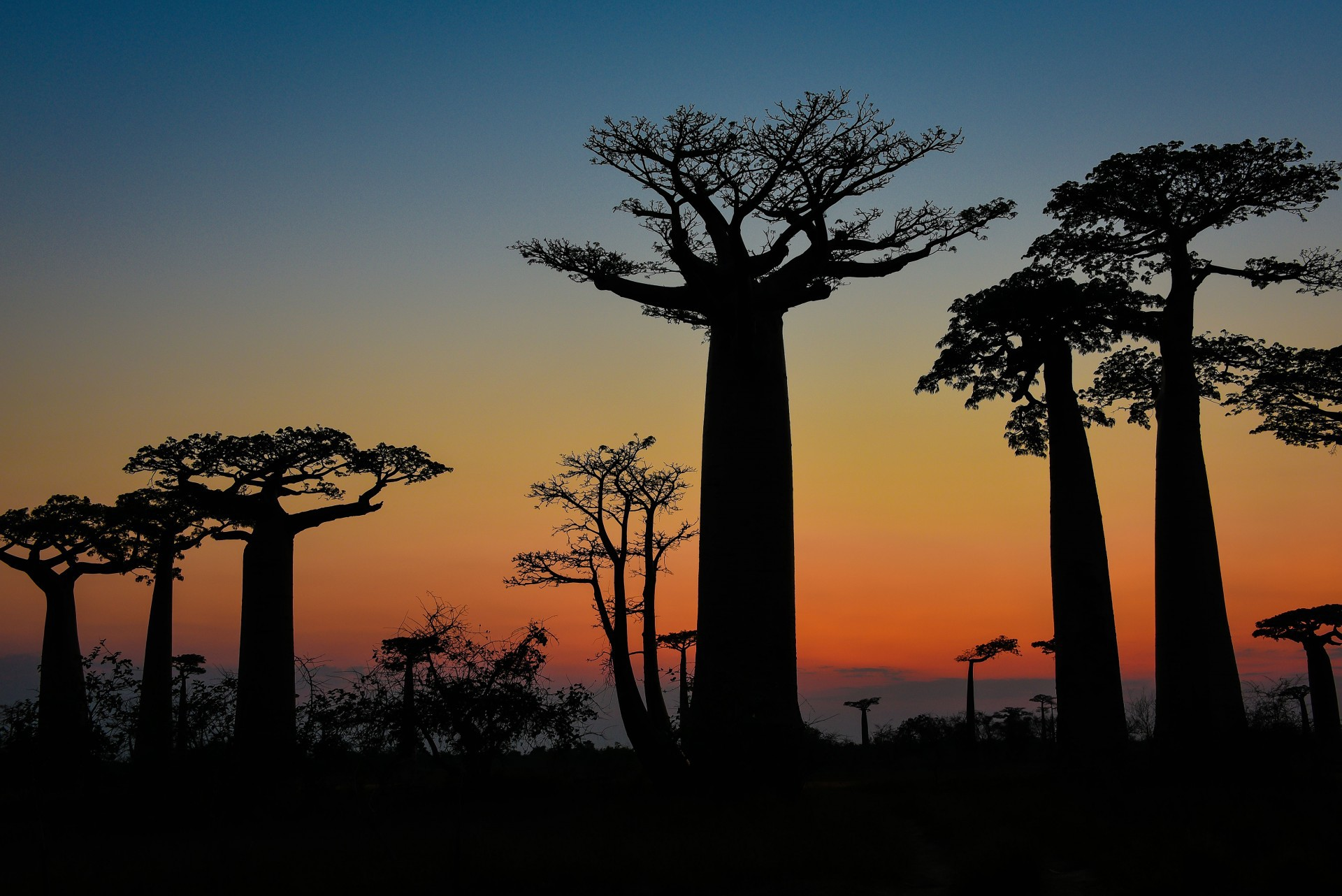 Baobab Download Free Backgrounds HD