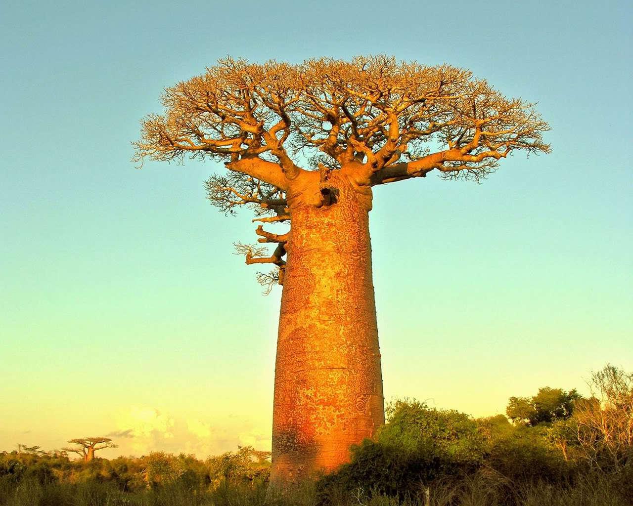 Baobab Images