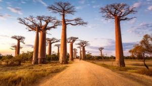 Baobab For Desktop