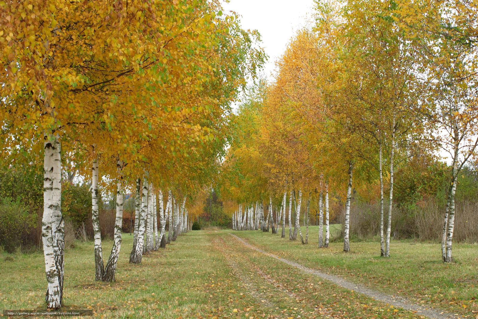 Birch 4K