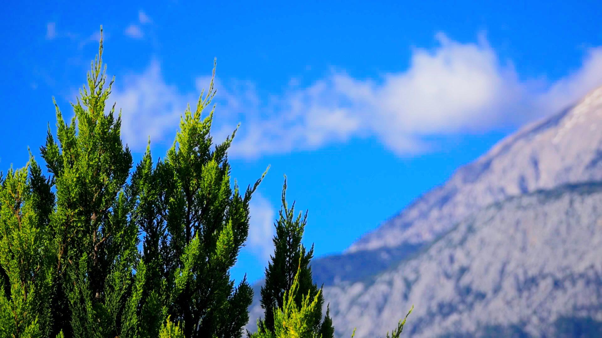 Cypress Wallpapers HD