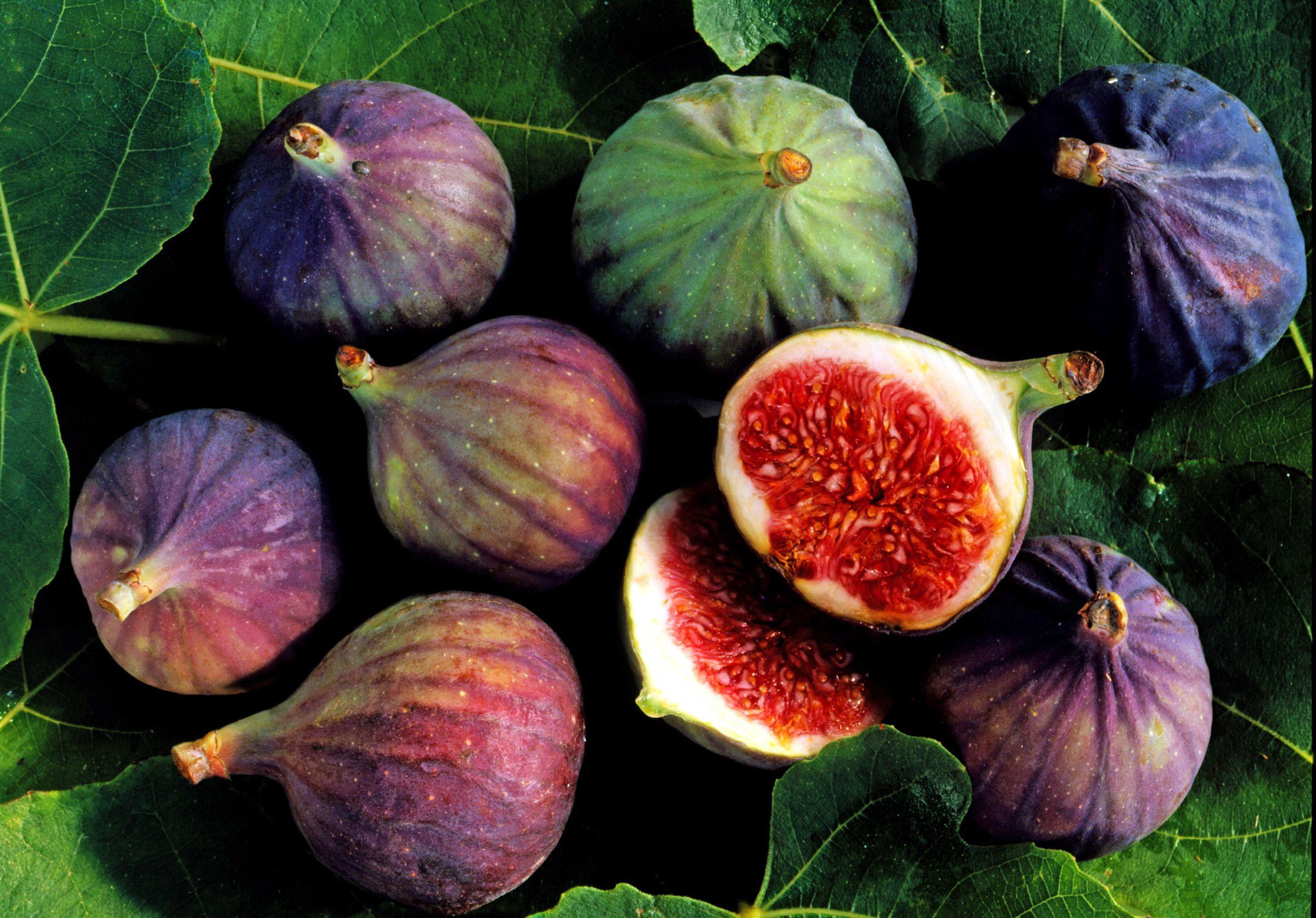 Fig Computer Wallpaper