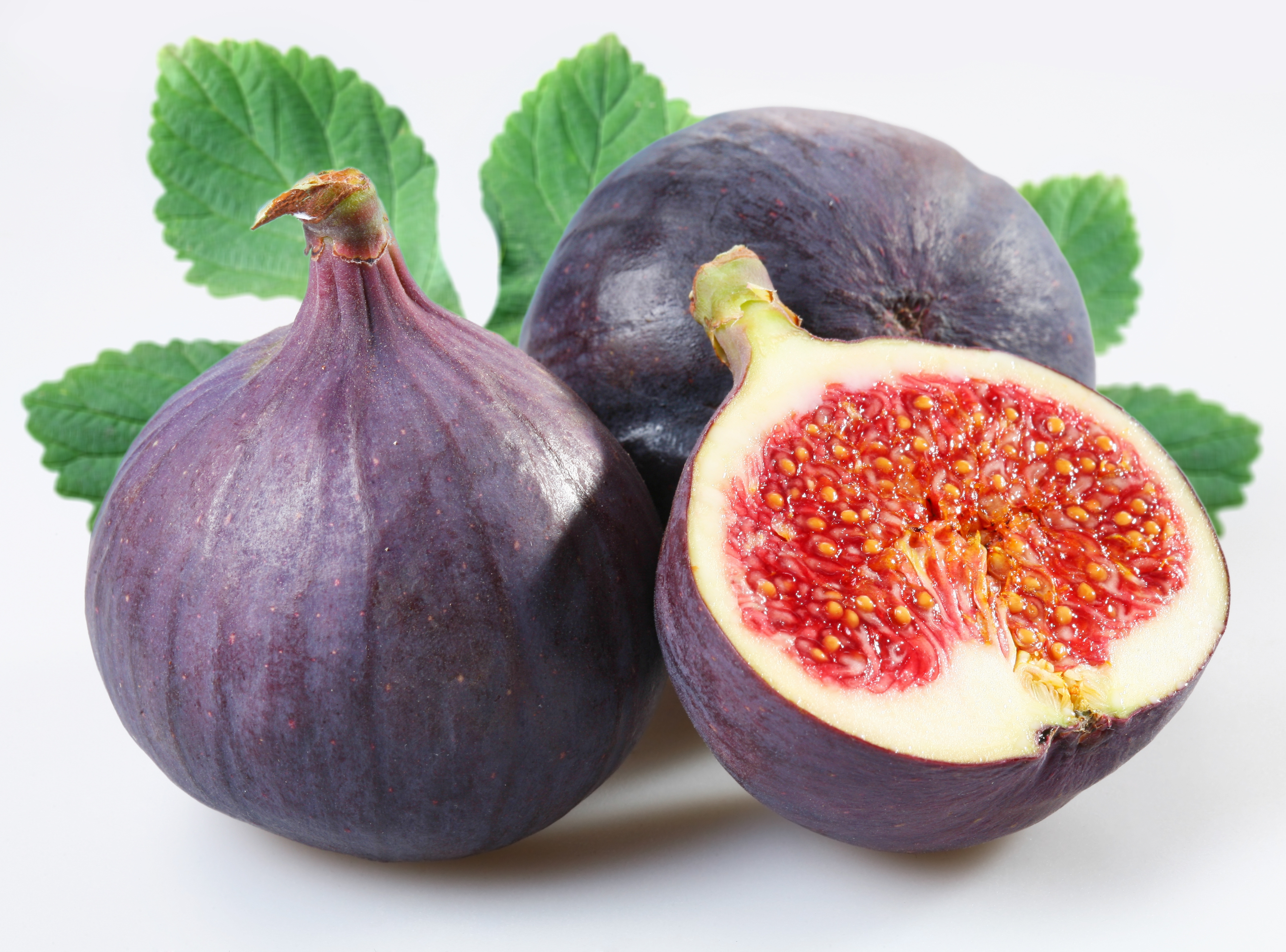 Fig Pictures