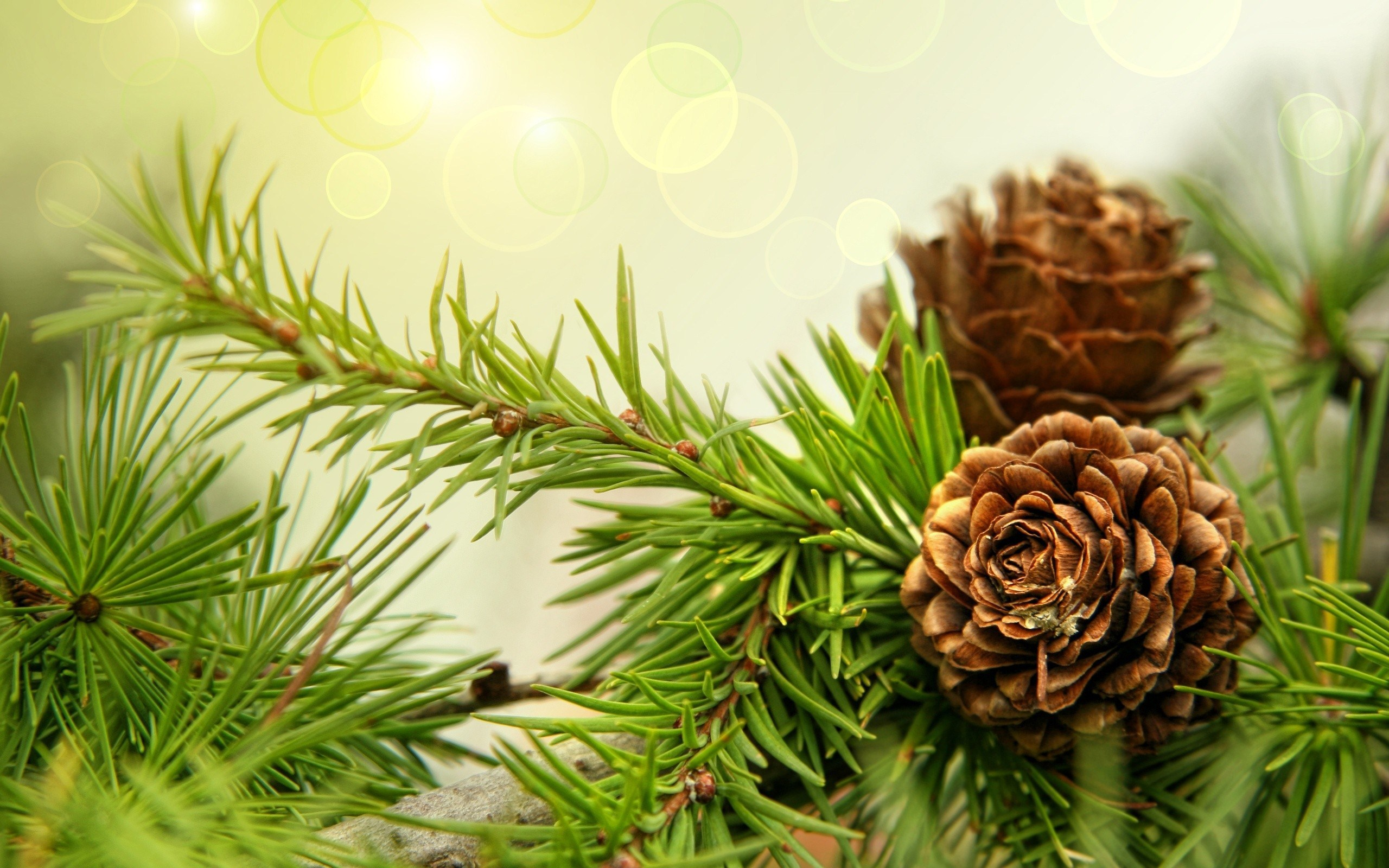 Fir Background