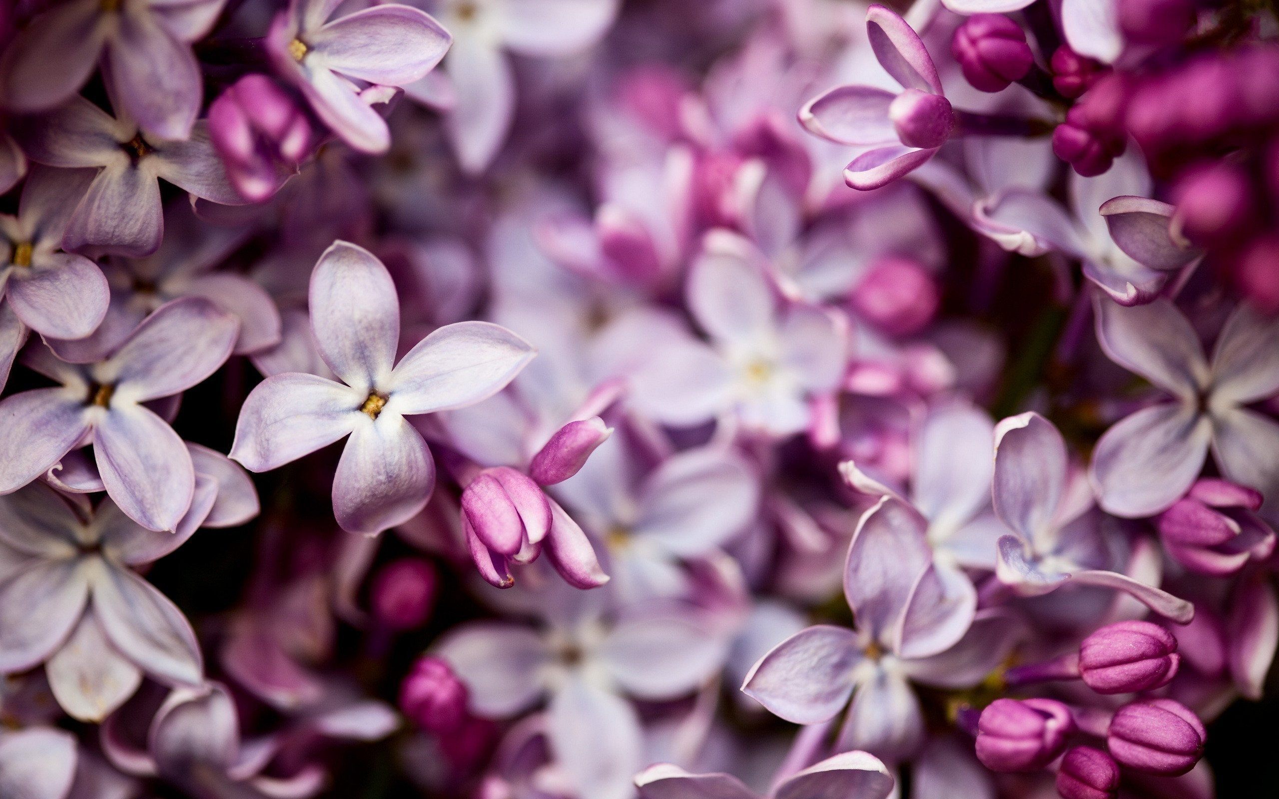 Lilac High Definition Wallpapers