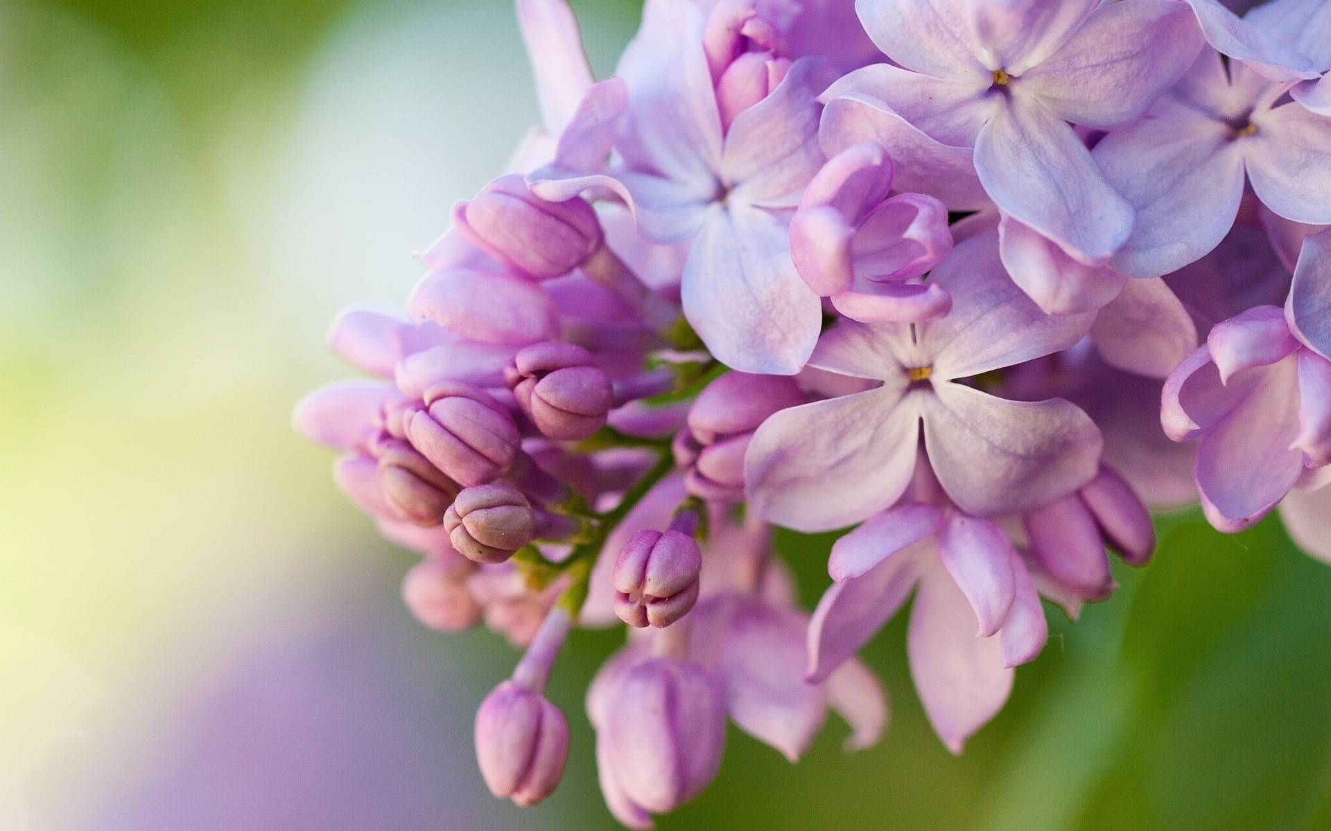 Lilac Wallpapers HQ