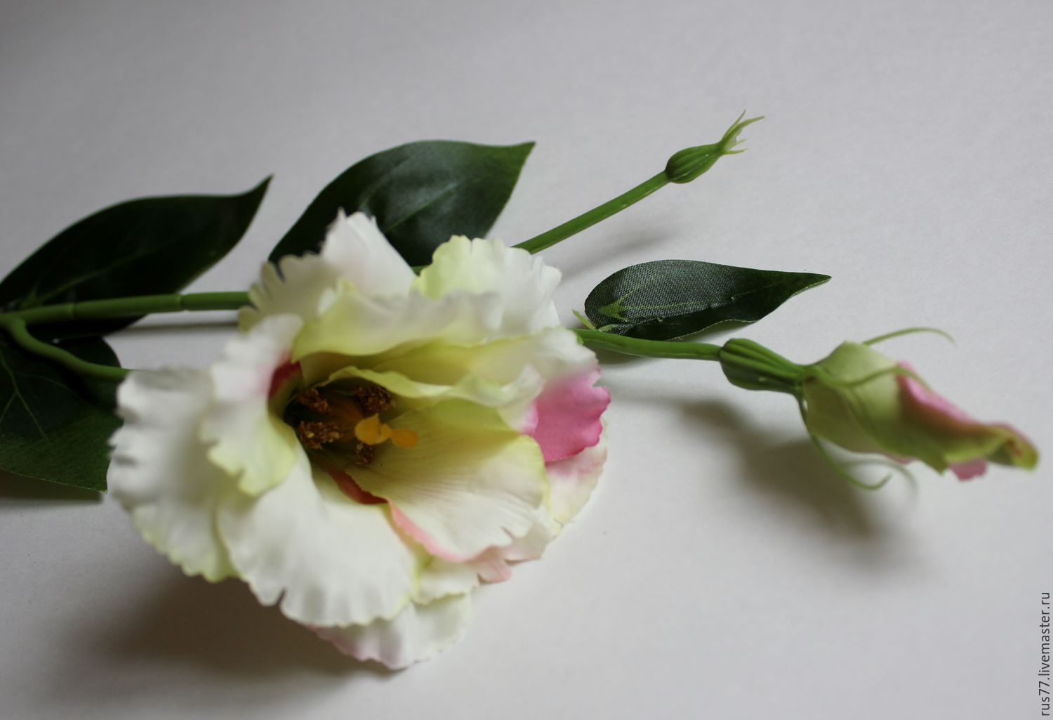 Lisianthus High Definition Wallpapers
