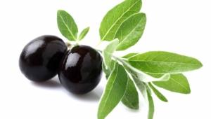 Olive Images