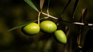 Olive For Desktop