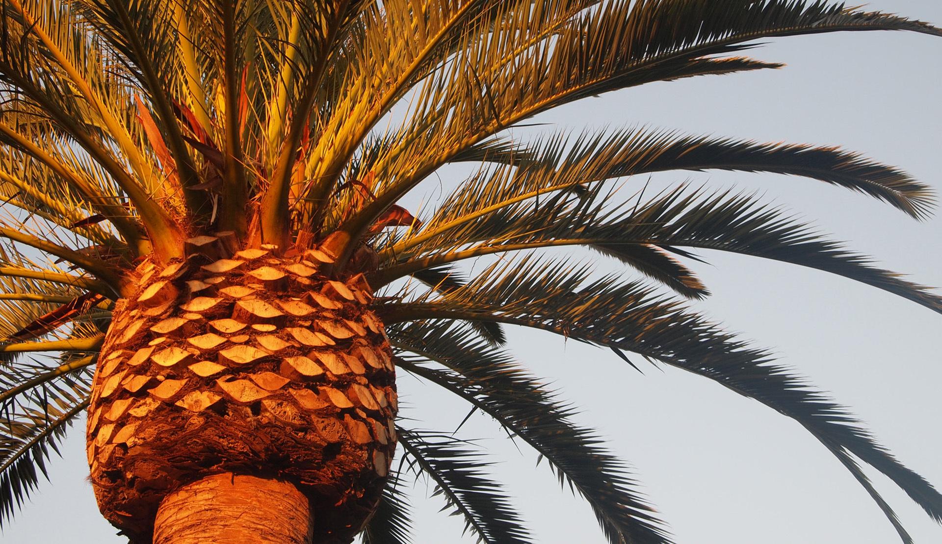 Palm 4K
