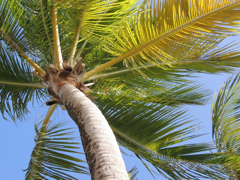Palm Background
