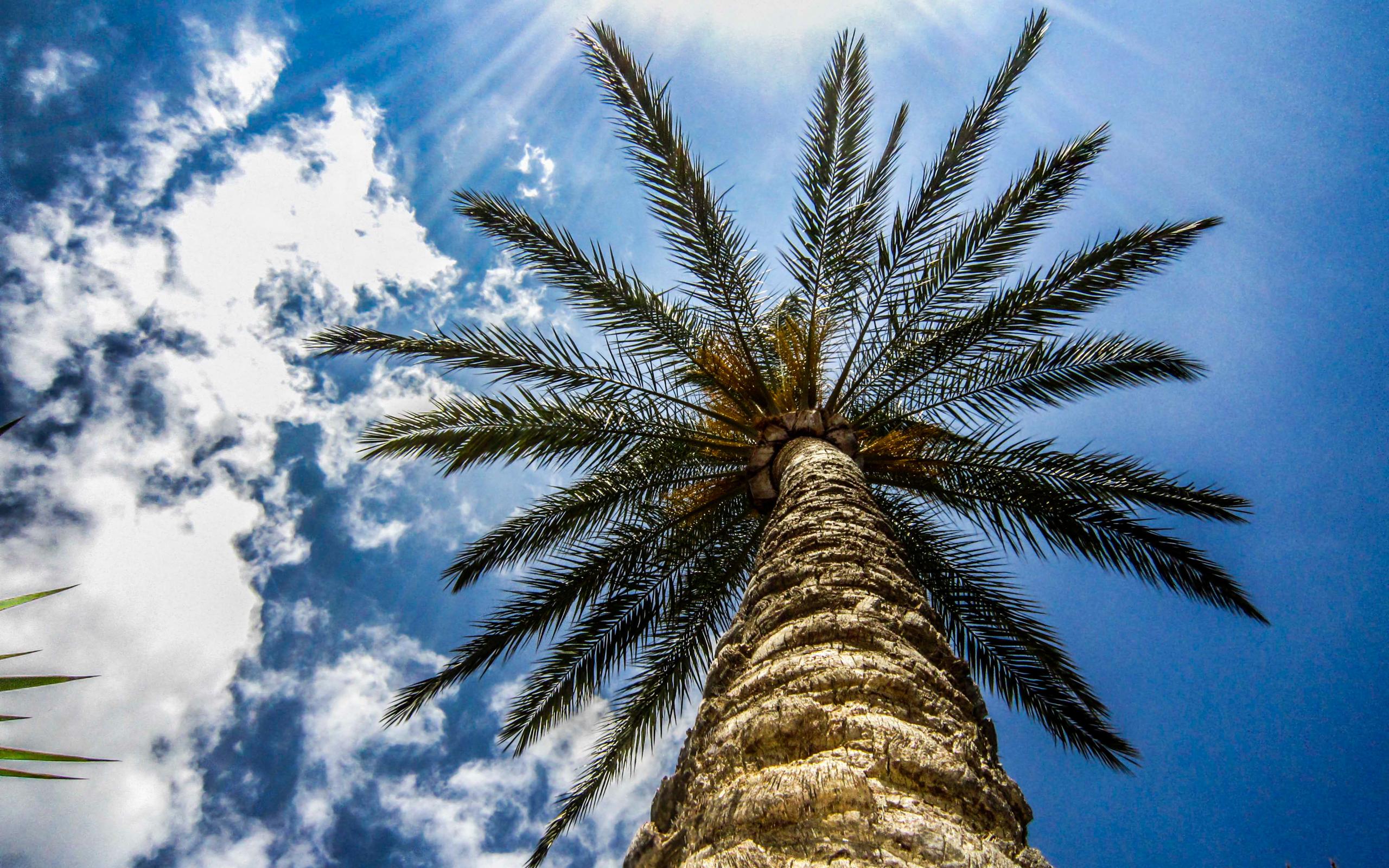 Palm Desktop Images