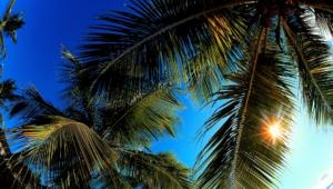 Palm Desktop Wallpaper