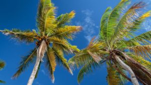 Palm Download Free Backgrounds HD